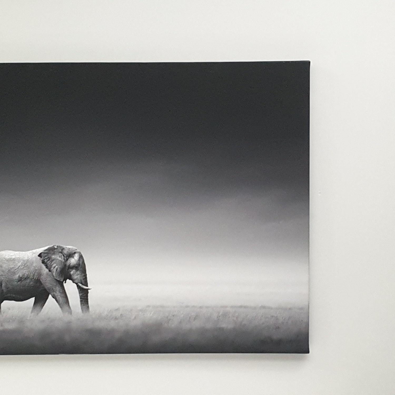 NICE รูปภาพพิมพ์ผ้าใบ Animal ขนาด 90x60 ซม. (ก.xส.) (ช้างและม้าลาย) C9060-1