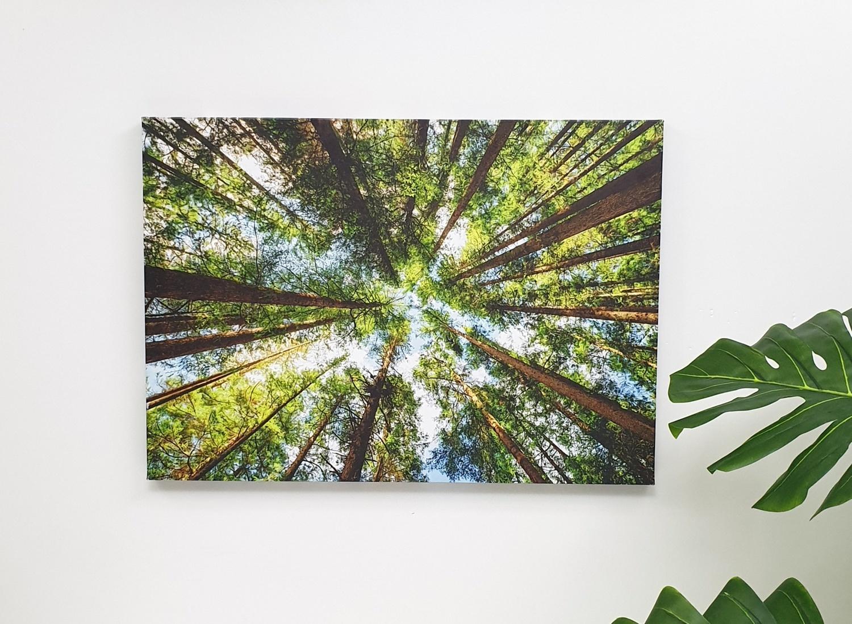 NICE รูปภาพพิมพ์ผ้าใบ View-Forest ขนาด 70x50 ซม. (ก.xส.) (ป่าไม้) C7050-14