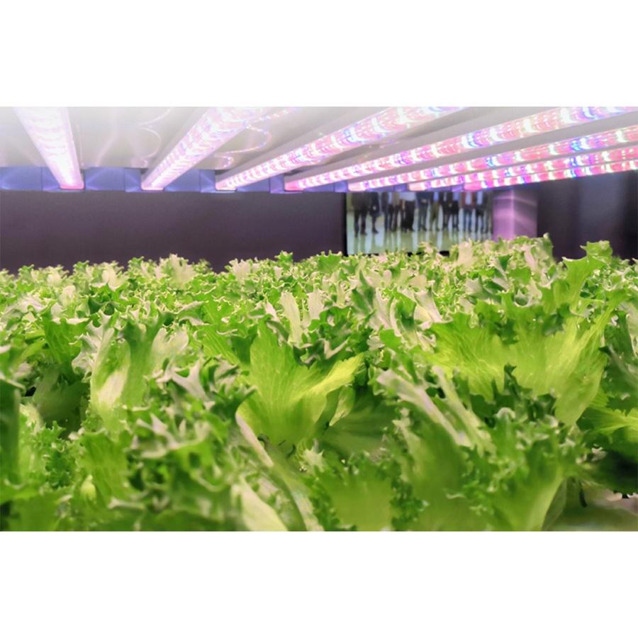 EILON หลอดไฟ LED T8 สำหรับเพาะปลูกพืช 18W ขนาด 1200mm WIN-120T8