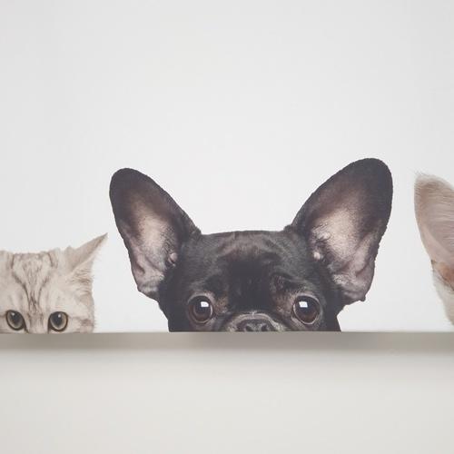 NICE รูปภาพพิมพ์ผ้าใบ Animals ขนาด 94x36ซม. (ก.xส.) (แมว) C9436-7