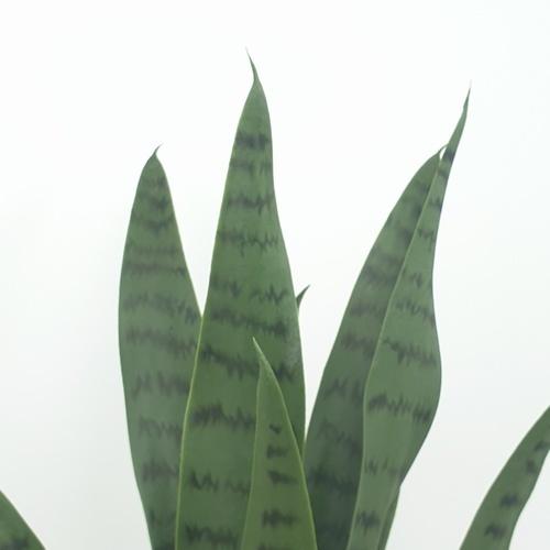 ต้นลิ้นมังกรประดิษฐ์  สูง 50CM AL17T090 เขียว