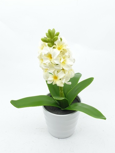 Tree O ดอกไฮอาซินธ์เทียม  XJLRD-18-1 สีขาว