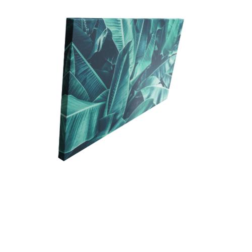 NICE รูปภาพพิมพ์ผ้าใบ Plant ขนาด  90x50ซม. (ก.xส.) (ใบกล้วย) C9050-2
