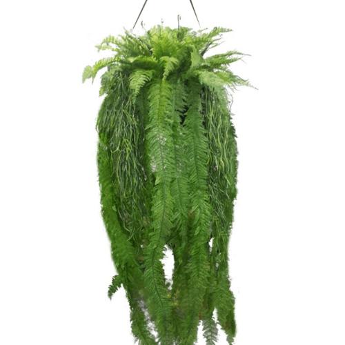 Tree O ต้นไม้ประดิษฐ์ตกแต่ง XCJ023 สีเขียว